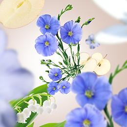 Lin en fleurs